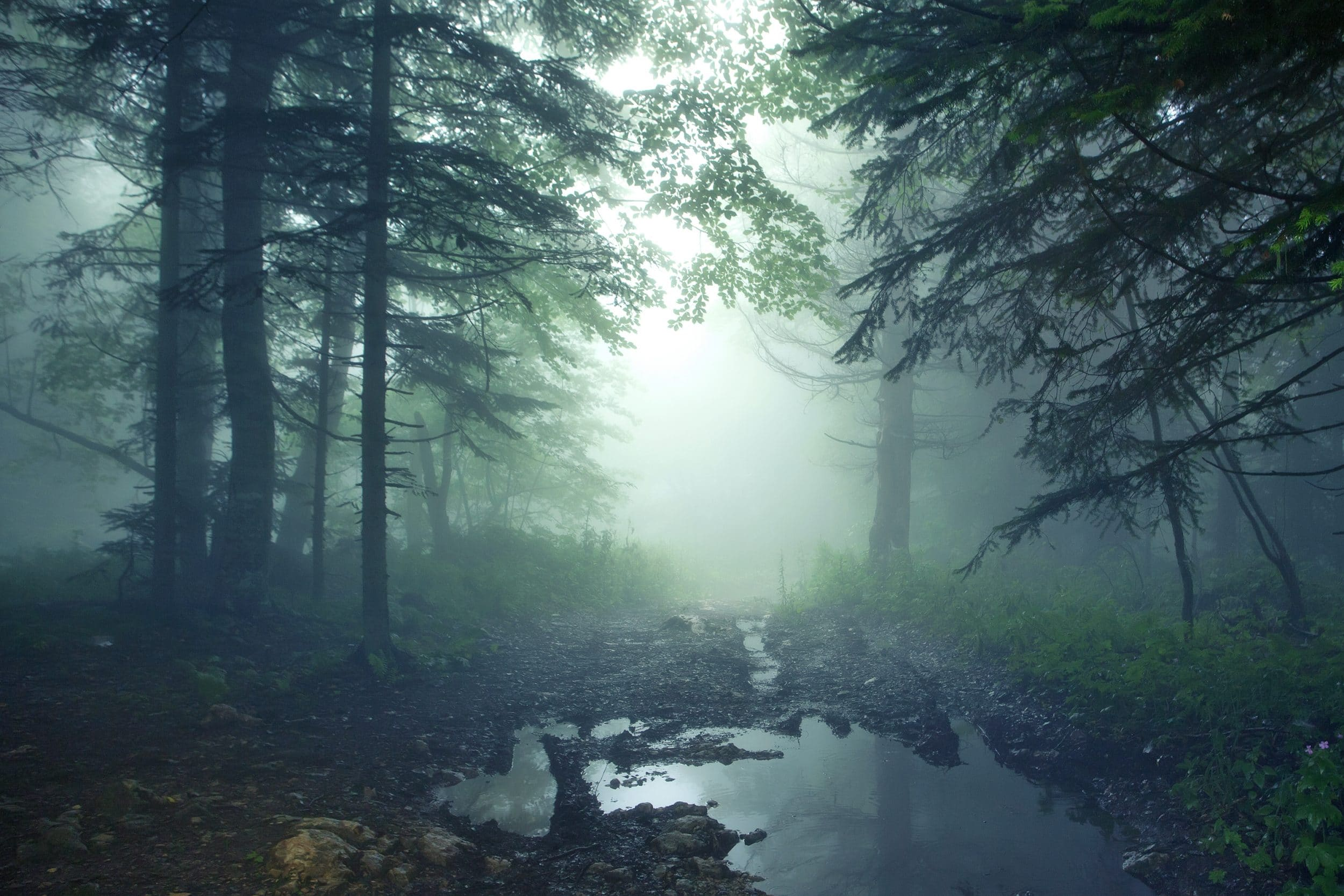 Beautiful fantasy landscape of mysterious forest and fog